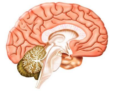 Энцефалит головного мозга человека